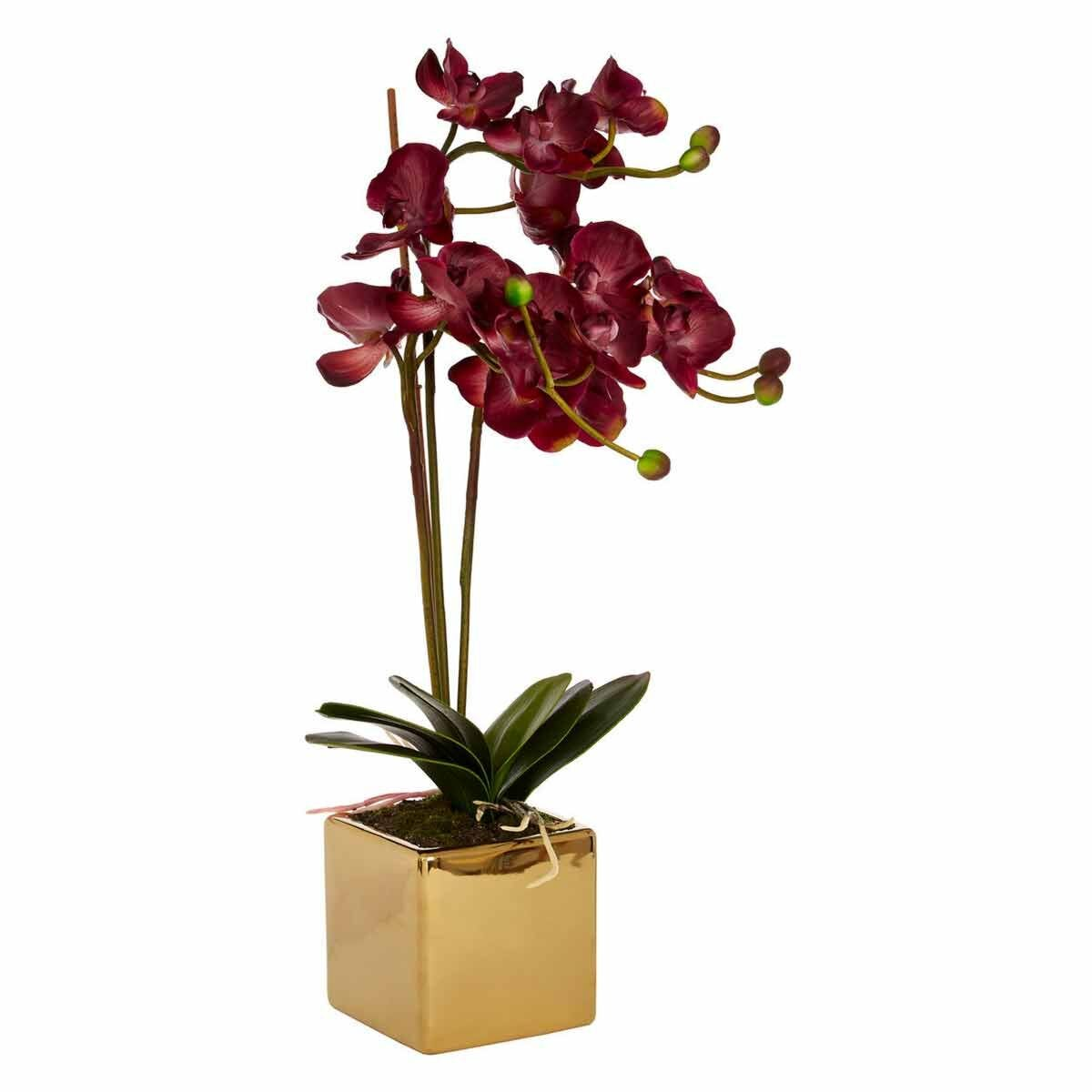 Interiors by PH Faux Claret Orchid Plant