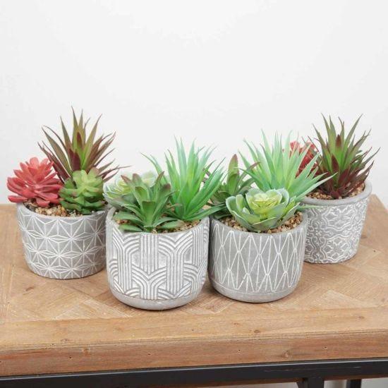 Decorative Large Potted Succulent