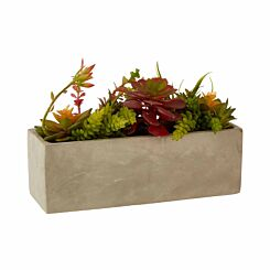 Interiors by PH Mixed Succulents in Cement Pot