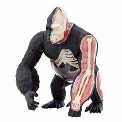Gorilla Anatomy Model 3D Puzzle