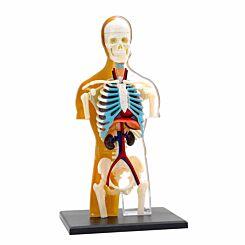 Human Body Anatomy Model 3D Puzzle