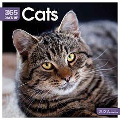 Cats 365 Days 2022 Wall Calendar