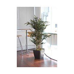 Natural Bamboo Tree Designer Lifelike Plant Display